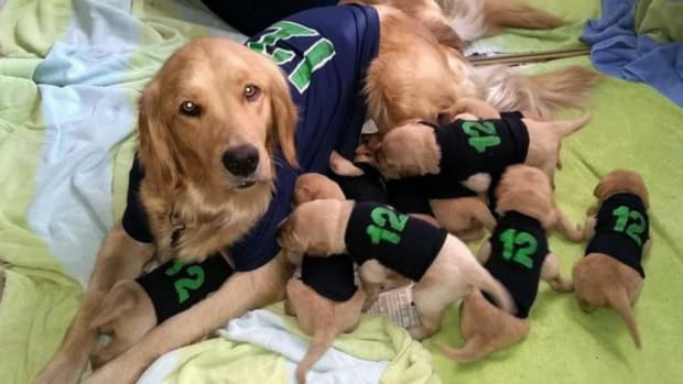 Seattle Seahawks dog has 11 puppies 12th man