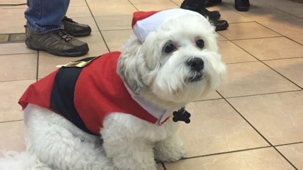 Milwaukee Brewers Hank the dog is now Santa Hank