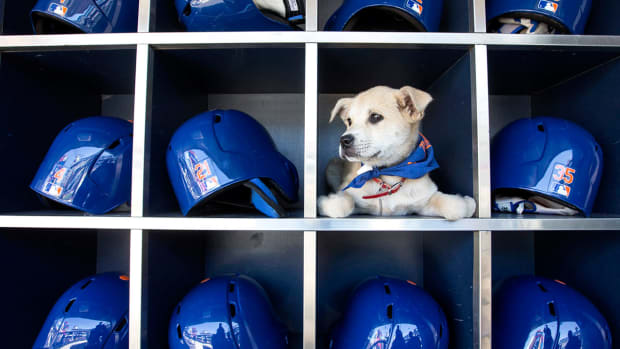 new-york-mets-dog.jpg