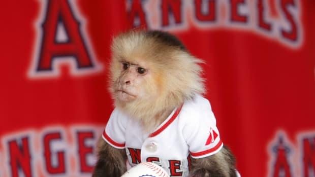 Angels rally monkey