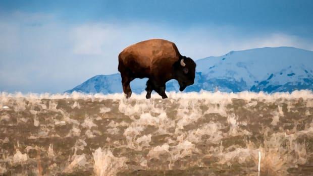 boneyard-part-four-bison-960.jpg