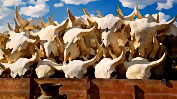 boneyard-part-1-skulls-960.jpg