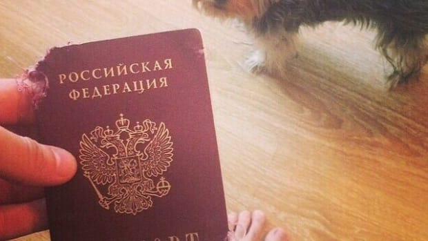 khl russian hockey player dog chews passport