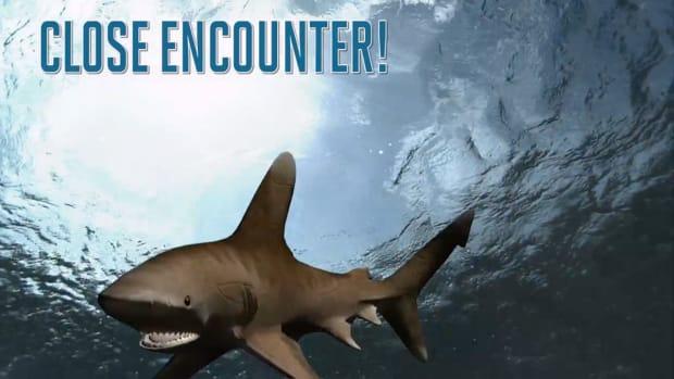 2157889318001_4364285753001_shark-attack.jpg