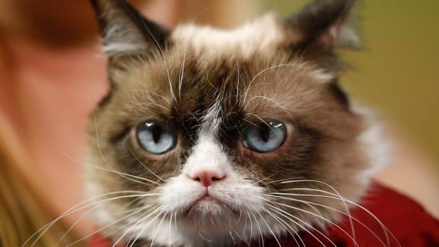 arizona-diamondbacks-grumpy-cat-first-pitch.jpg