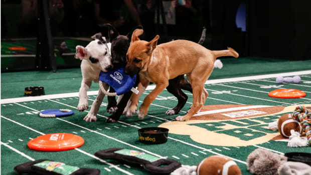 puppy bowl 2015 viewers ratings