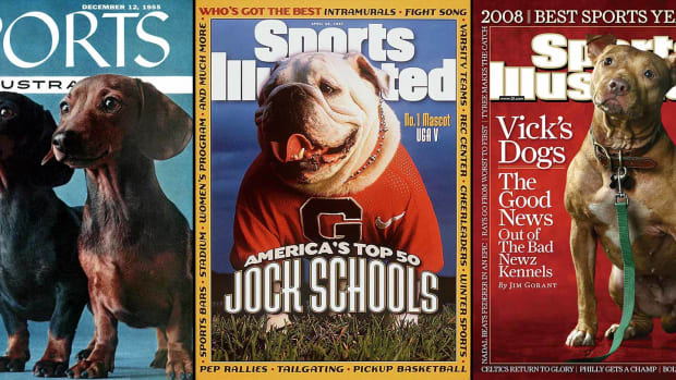 00-intro-SI-covers-dogs.jpg