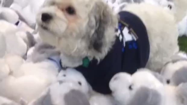 milwaukee brewers hank dog mascot national puppy day