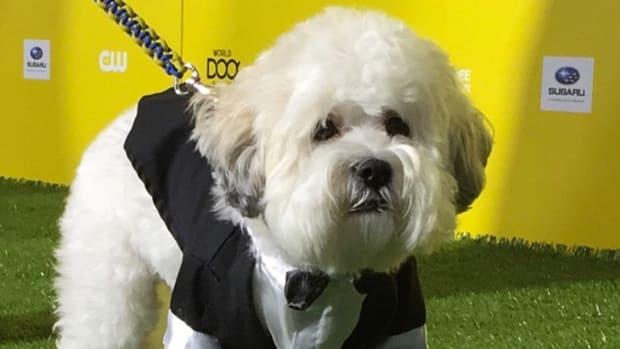 hank the dog world dog awards brewers