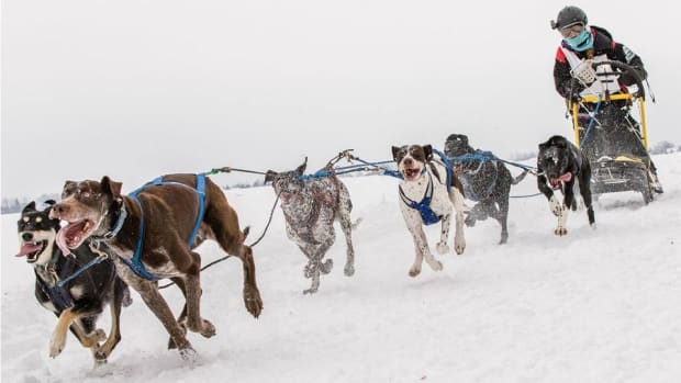 sled-dog-racing-960.jpg