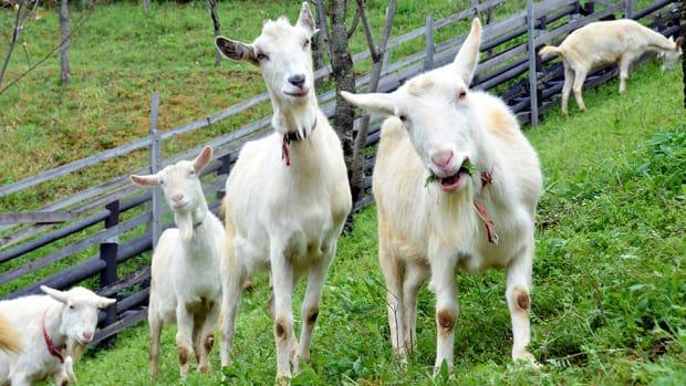 hartford-yard-goats-whalers-colors-logo-uniforms.jpg