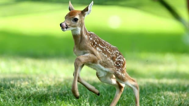 deer-soccer-field-video.jpg