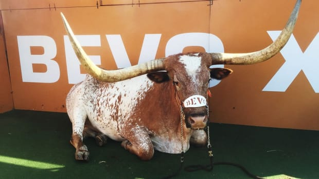 Texas handlers remember Bevo XIV, the calm steer beloved by an entire fan base