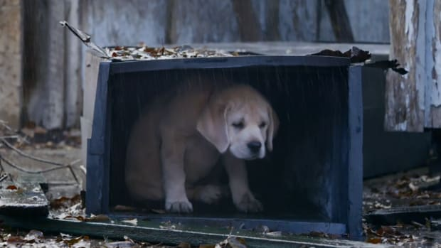 Budweiser brings back puppy in Super Bowl commercial IMAGE