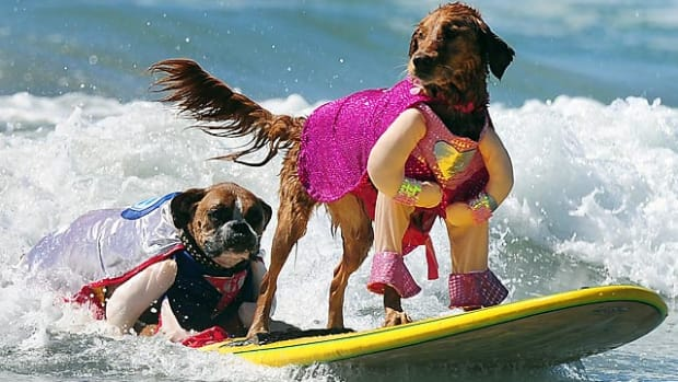 131003155624-dog-surfing-single-image-cut.jpg