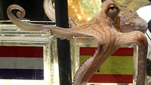 pauloctopus-298.jpg