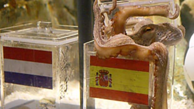 octopus2-298.jpg