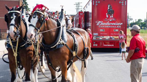 Budweiser Clydesdale horses have appeared in many Super Bowl commercials.