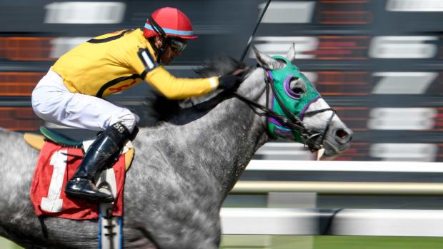Horse Racing Tampa Bay Downs