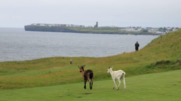 South of Ireland Amateur Open 2016 _B7E8117