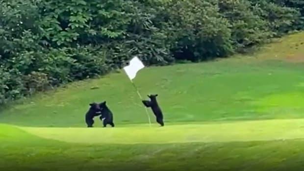 bear-cubs-north-carolina-course
