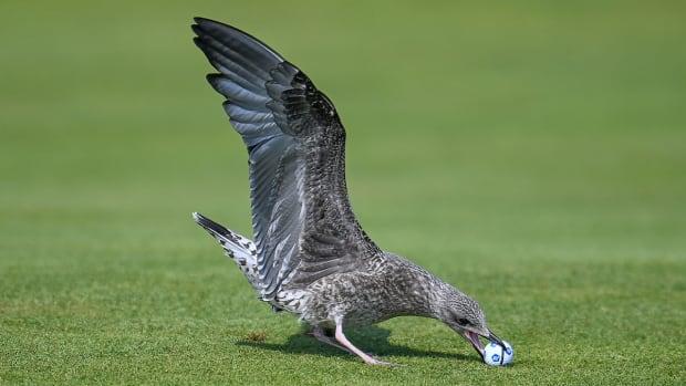 seagull-madeline-sagstrom-2021-british-open