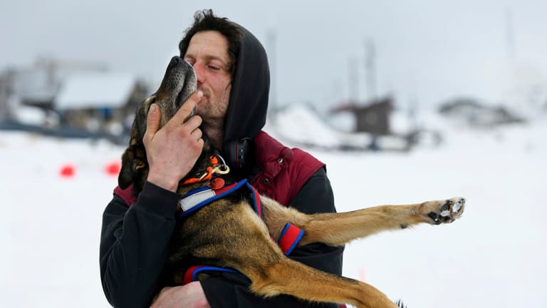 French Musher Was leading Iditarod, But Then His Dogs Quit