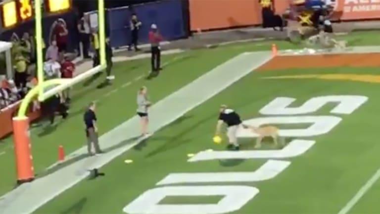 Watch: Dog Makes Amazing 83-Yard Frisbee Catch at AAF Orlando Apollos Game