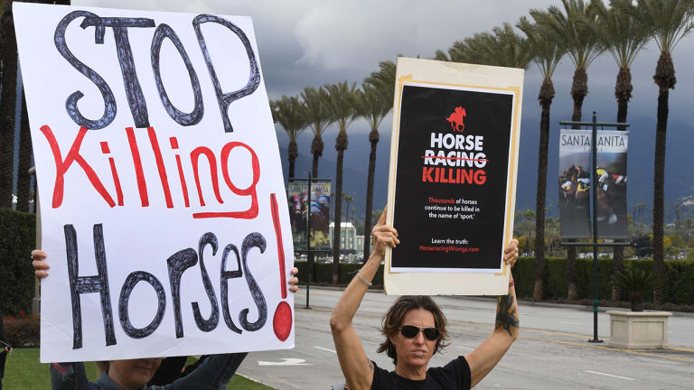 Horse Racing's Rampant Problem Leaves Sport With More Questions Than Answers