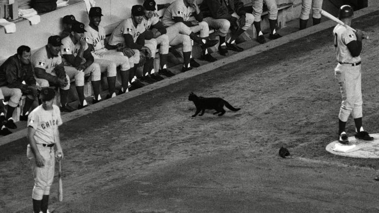 'It's My One Claim to Fame': The Untold Story of the Cubs' Black Cat Jinx