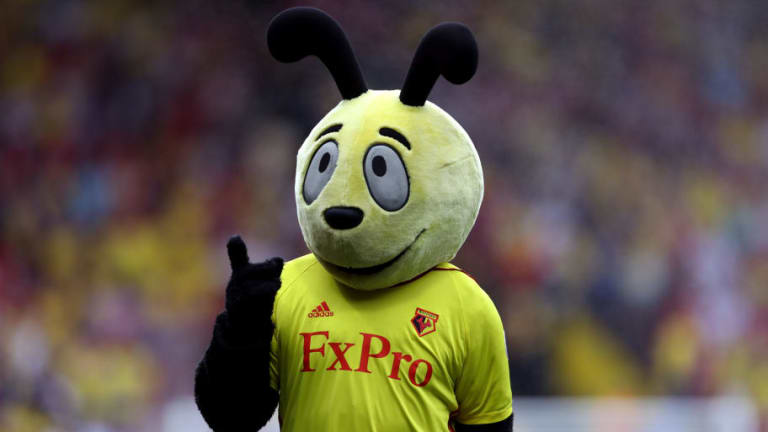 Harry the Hornet Looks to Wind Up Roy Hodgson by Performing Some More Questionable Antics