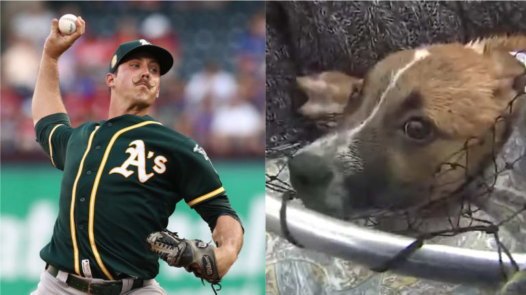 Watch: A's Pitcher Daniel Mengden Helps Rescue Frightened Puppies From Sewer Drain in Houston
