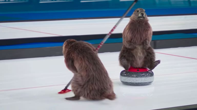Origin of The Curling Marmots