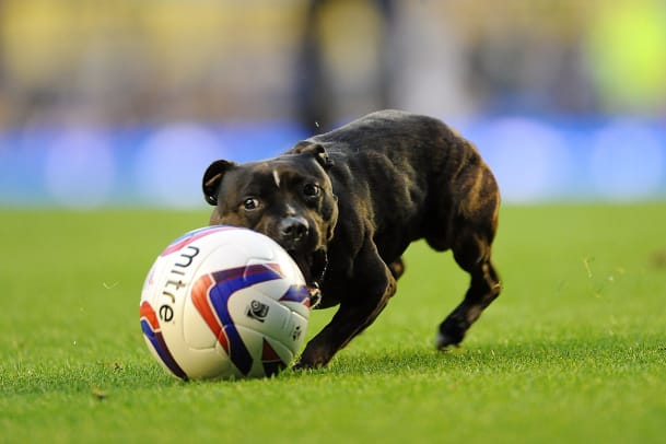 Dog-Pitch-Invader-14.jpg