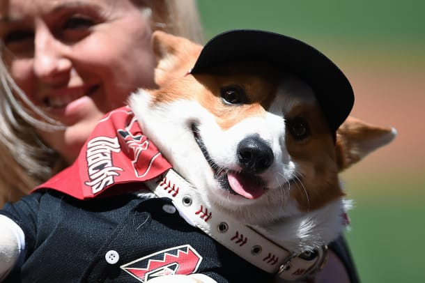 Arizona-Diamondbacks-Bark-at-the-Park-dogs-GettyImages-527980190_master.jpg