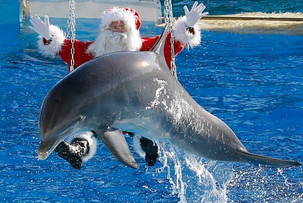 121221102229-santa-dolphin-6-single-image-cut.jpg