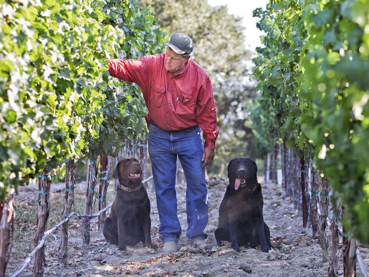 tom-seaver-vineyard