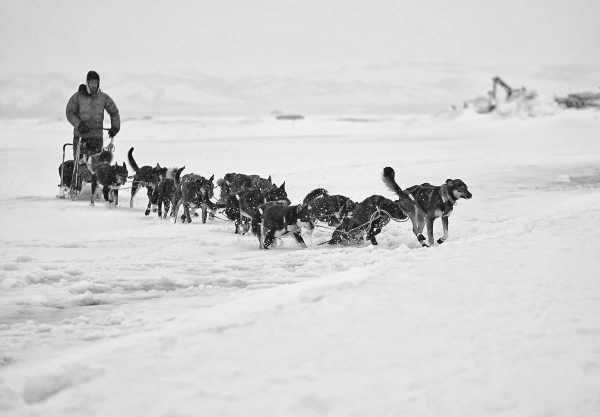 2019_Iditarod_00024.JPG
