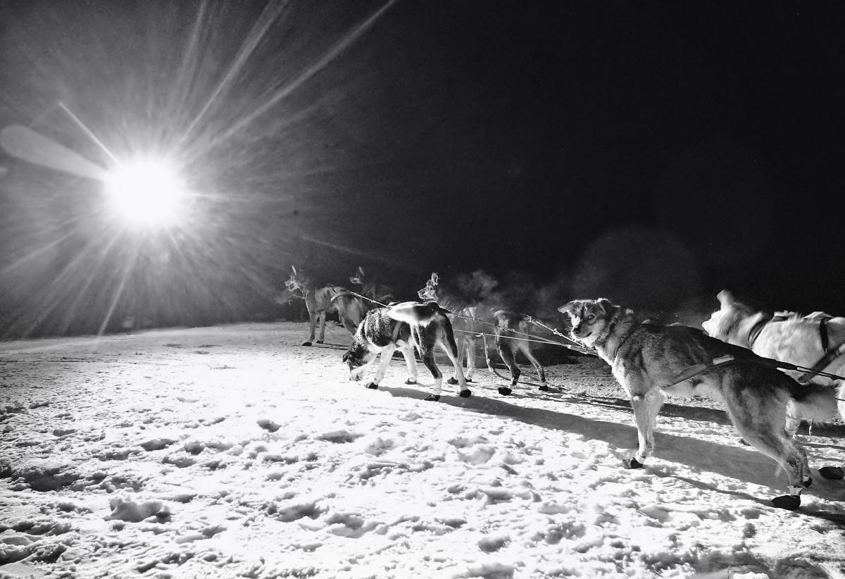 2019_Iditarod_00017.JPG