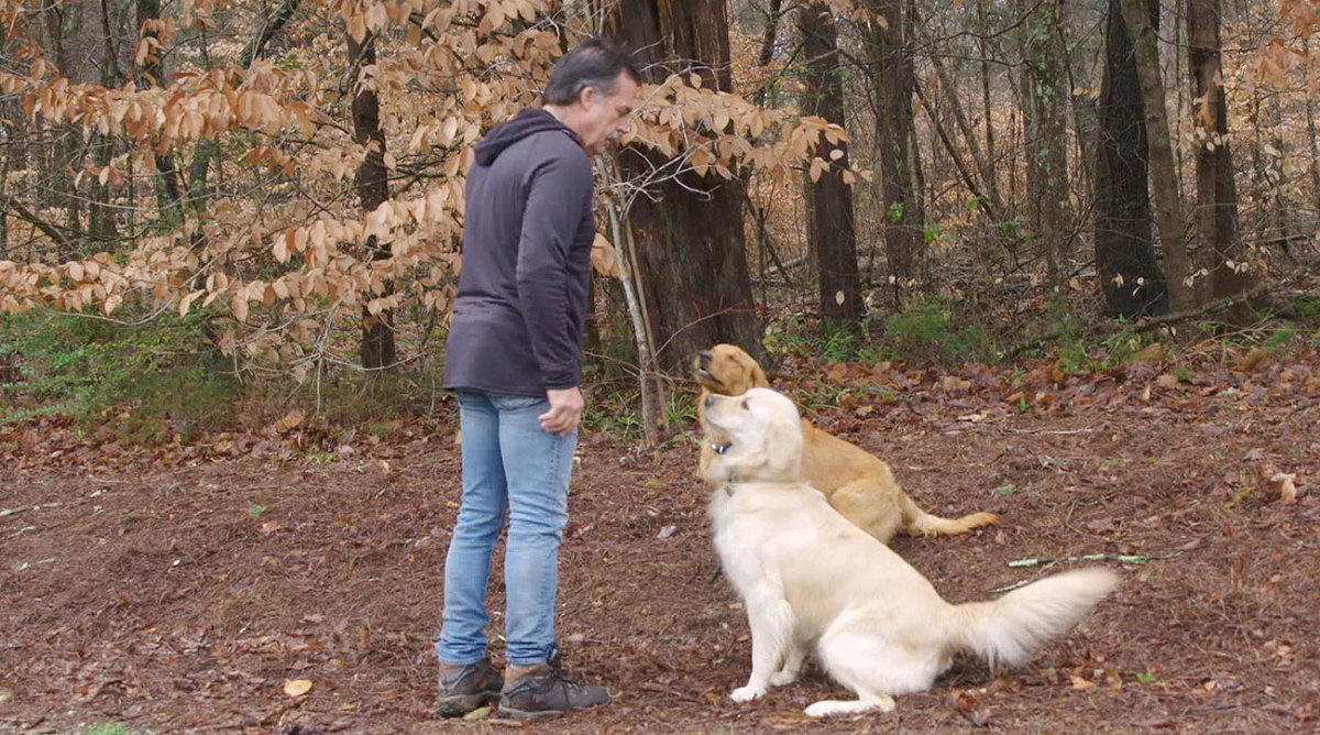 Jeff Fisher and his two dogs, Hunter (left) and Dirk, at his property outside of Nashville.