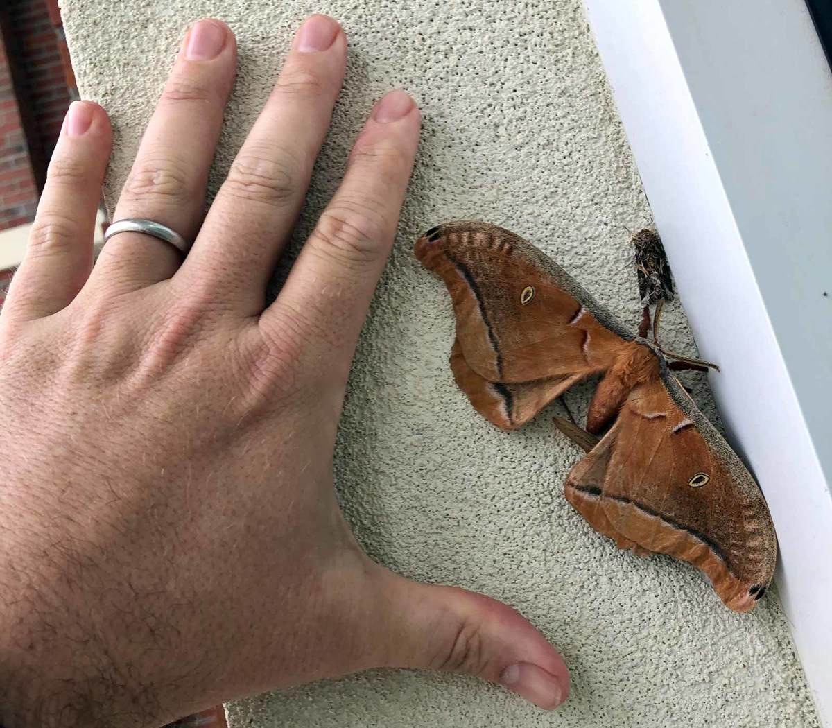 troy-moth.jpg