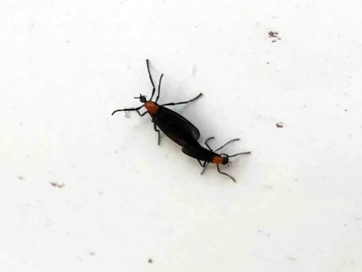 troy-lovebugs.jpg