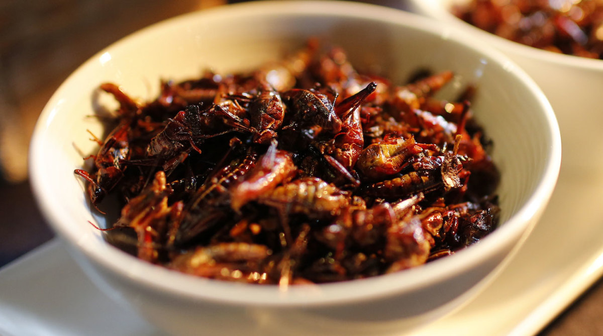 grasshoppers-inline.jpg