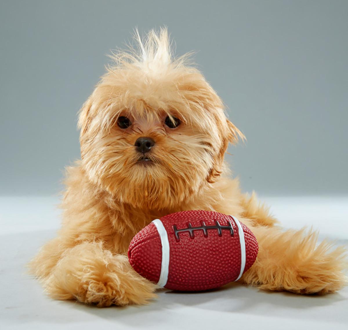 rory_florida-little-dog-rescue_team-fluff_2.jpg