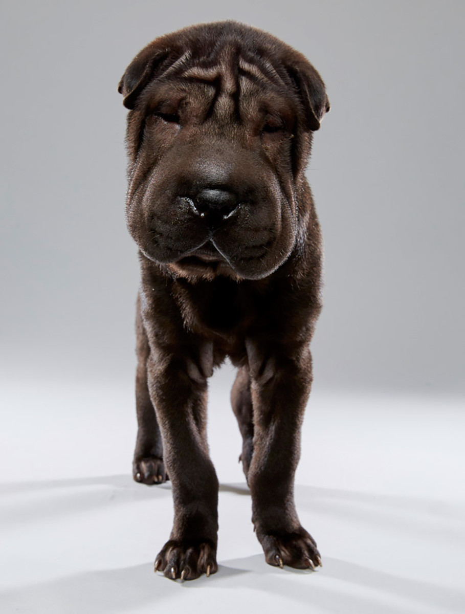 smooshie_florida-little-dog-rescue_team-ruff.jpg