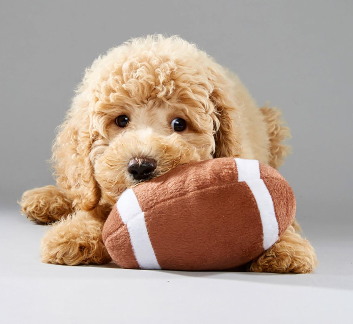 oliver_florida-little-dog-rescue_team-fluff_2.jpg