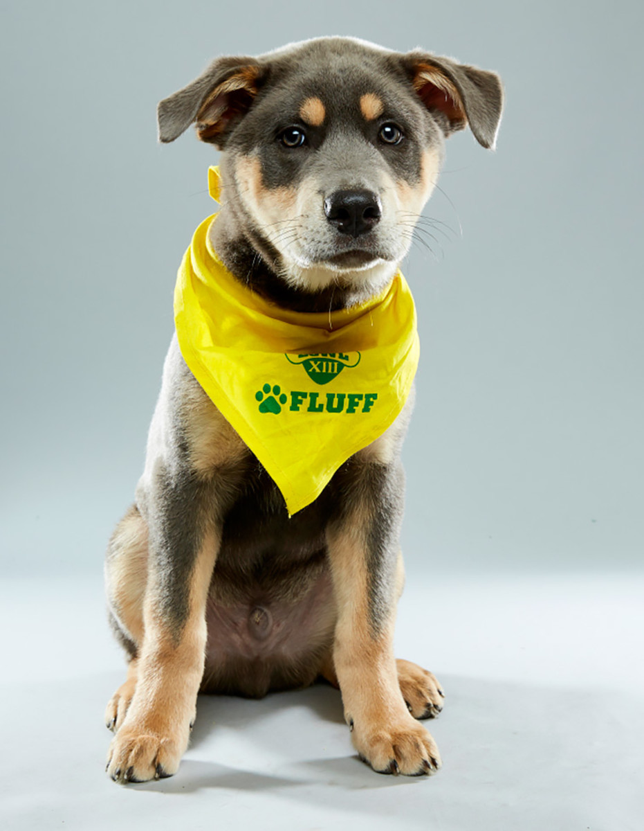 nyquist_bonnies-animal-rescue-kingdom_team-fluff_1.jpg