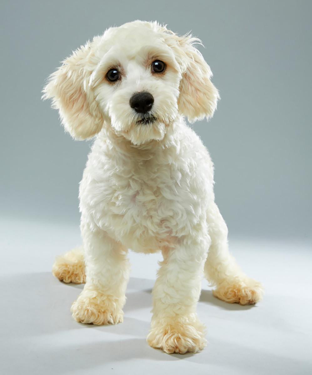 nikita_florida-little-dog-rescue_team-fluff_1.jpg