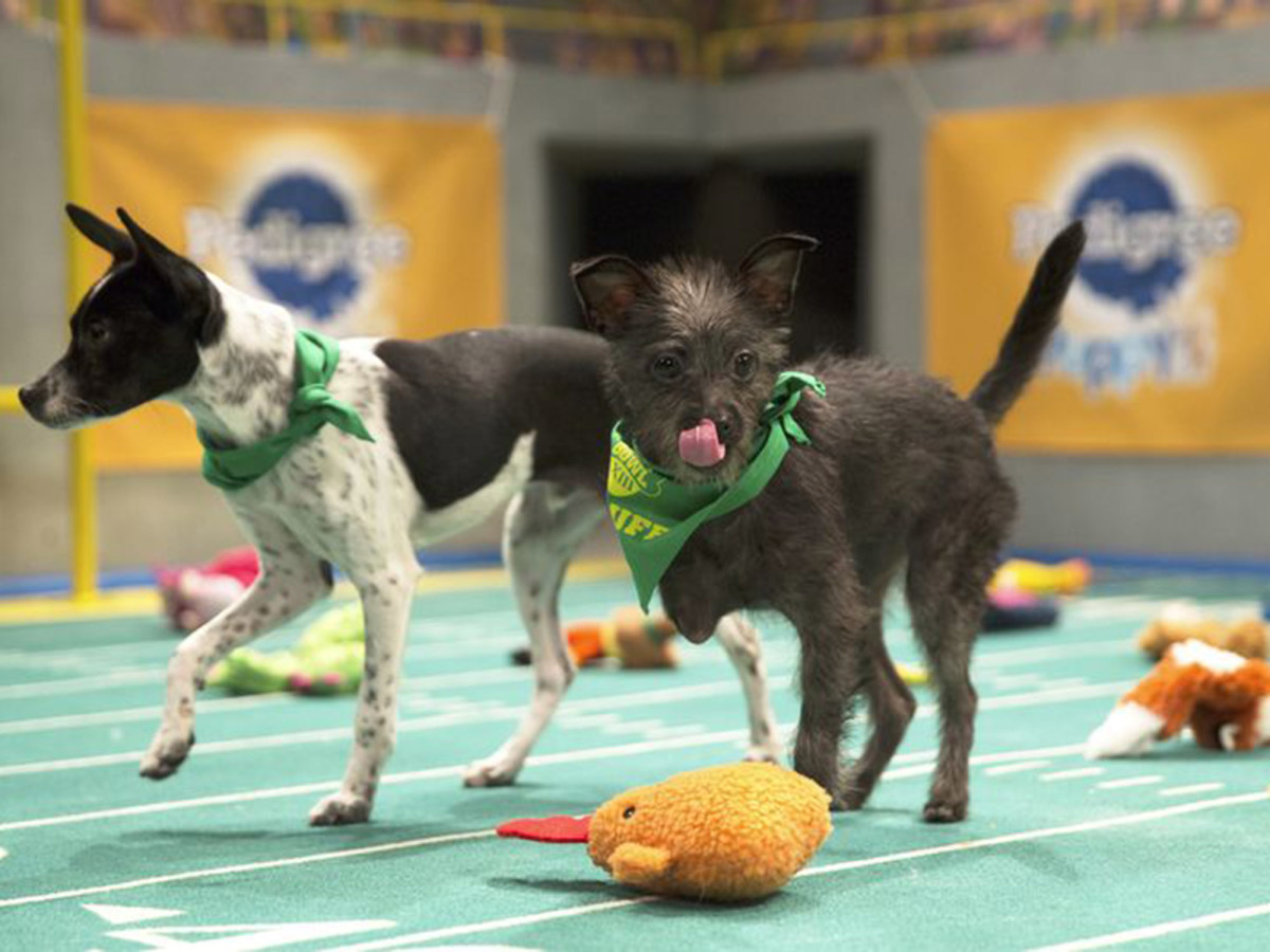 puppy_bowl_lucky_and_ricky.jpg