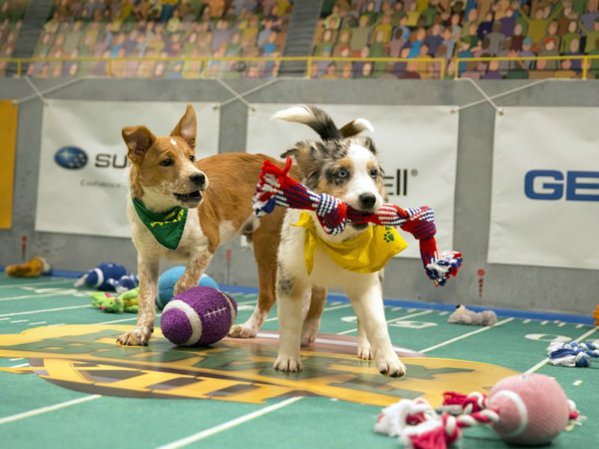 puppy_bowl_woody_and_tucker.jpg